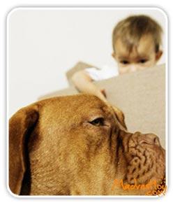 miedo-perros