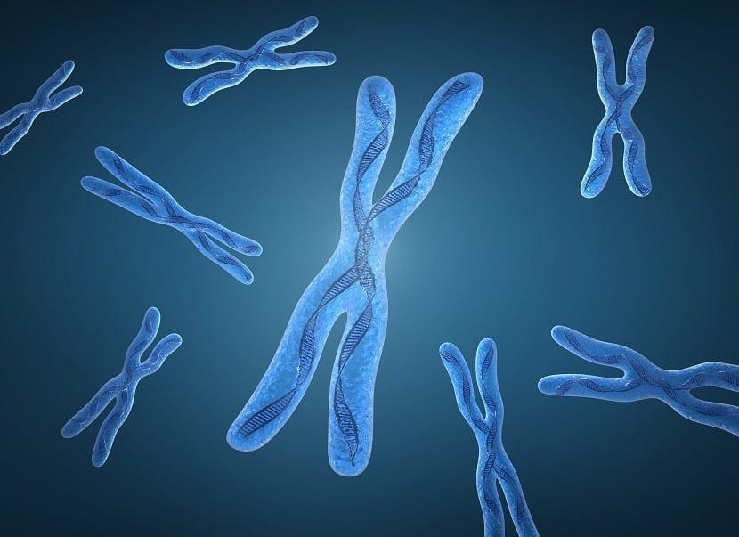 Alteración cromosomática en el embarazo