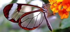 Enfermedad piel de mariposa o cristal, Epidermolisis Bullosa