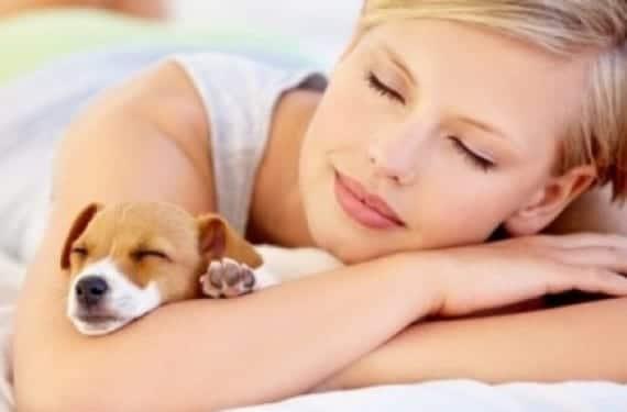 Precauciones de tener mascotas al estar embarazada