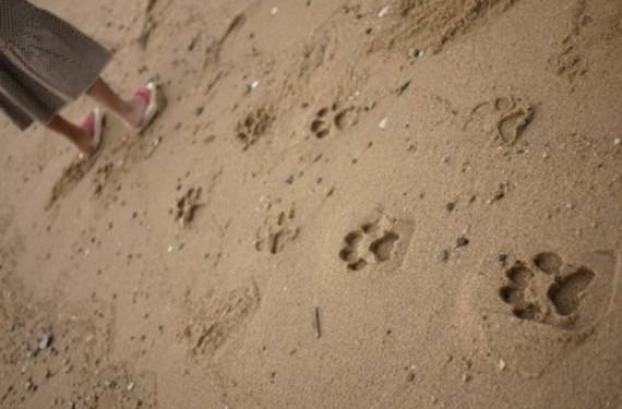 Ashiato chanclas pies de gato