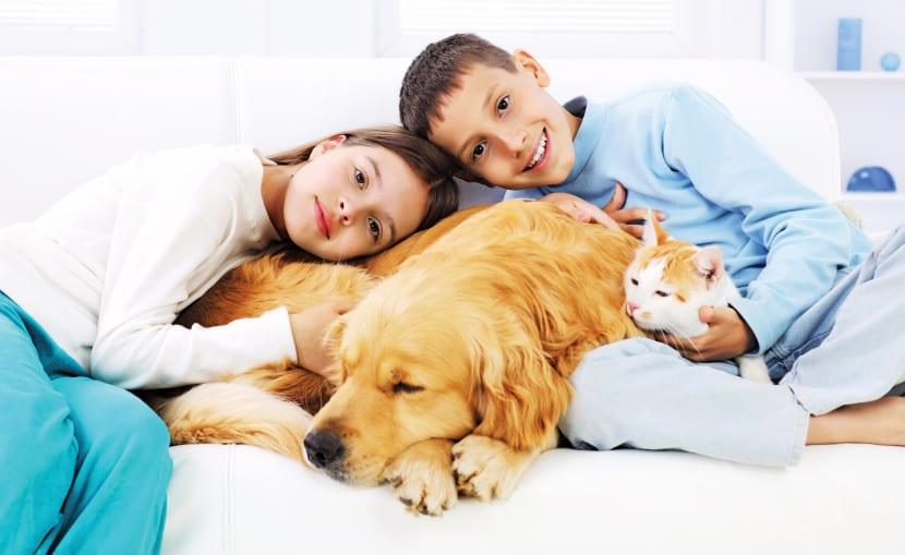 familia mascotas