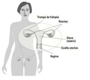 Conociendo el ciclo menstrual: la fase lútea