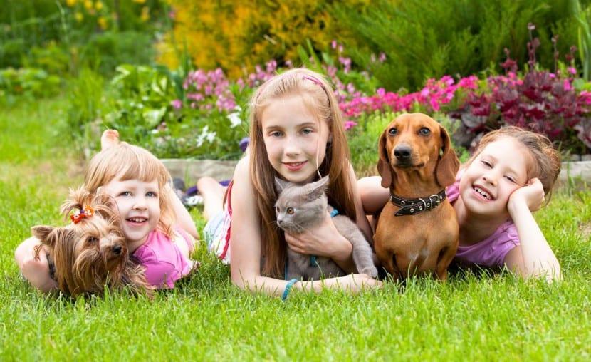 mascotas y nenes