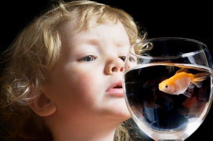 niño muestra su curiosidad mirando un pez en la pecera