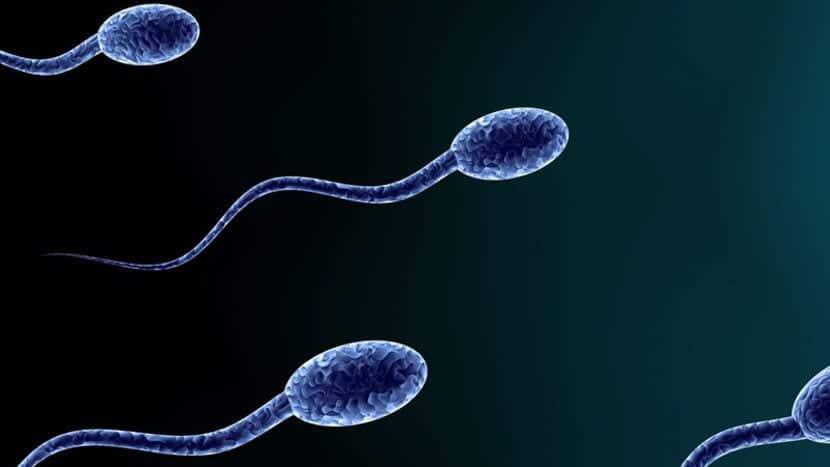La exposición a los pesticidas durante la adolescencia puede dar lugar a problemas de fertilidad, según un estudio