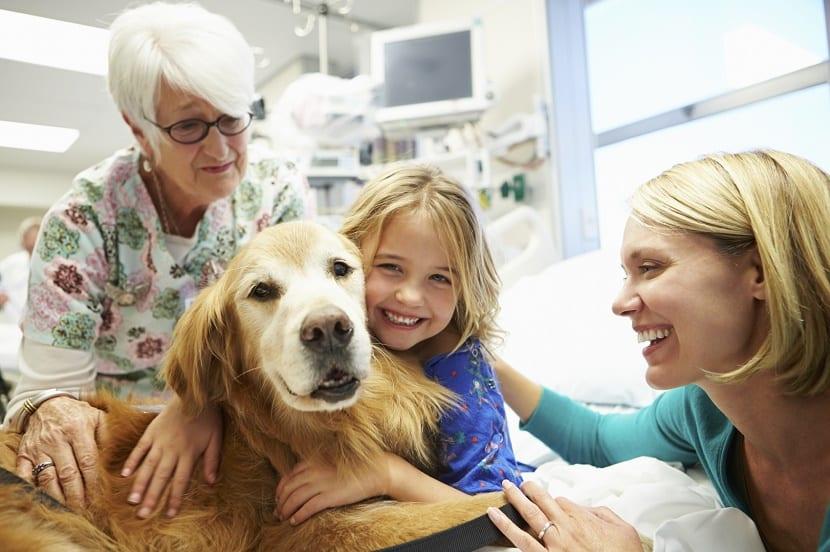 Terapia Asistidas por Animales