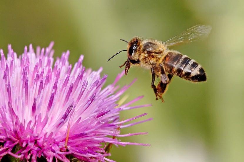 abeja que vuela