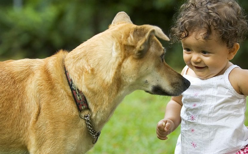 prevenir mordedura de perro