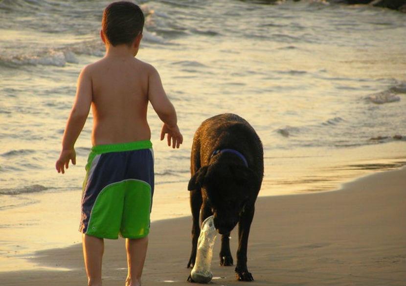 nino y perro en la playa