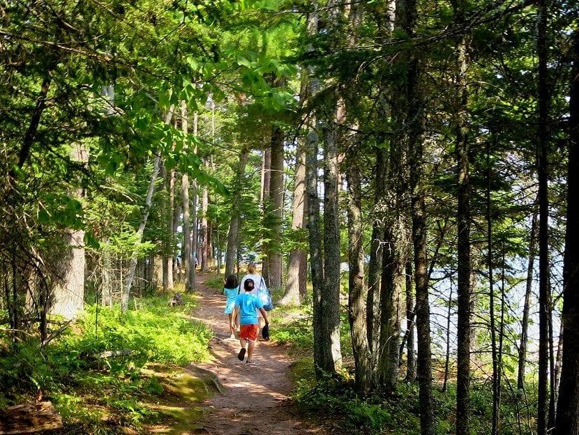 senderismo bosque
