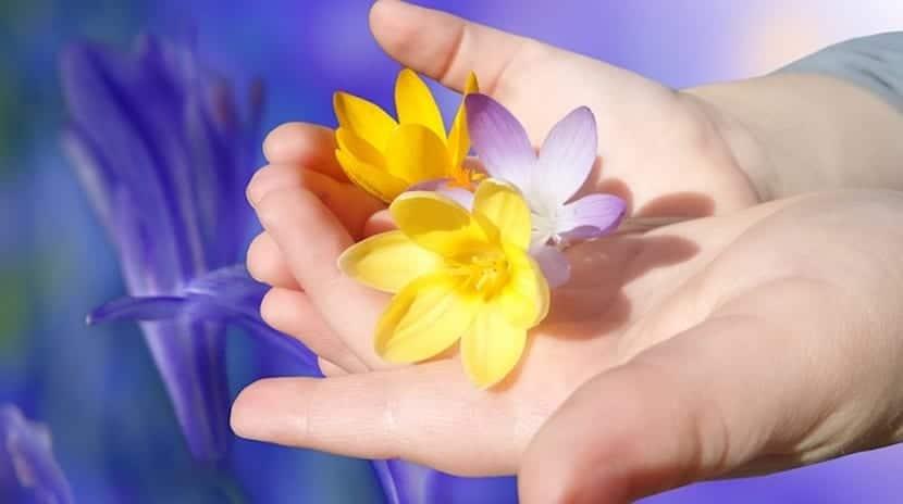 Mano de niño sujetando flores