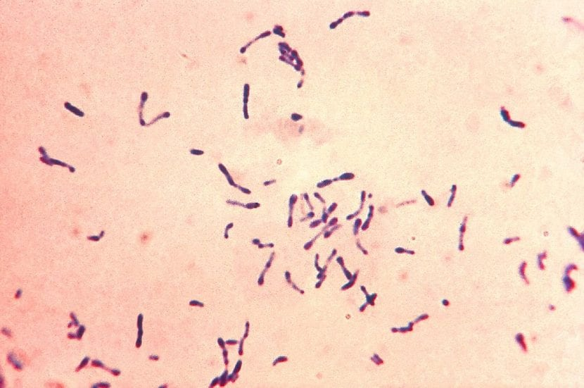 gérmenes de la difteria