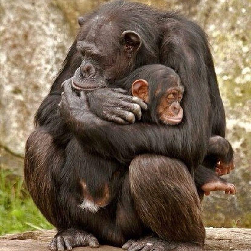 Maternidad primitiva