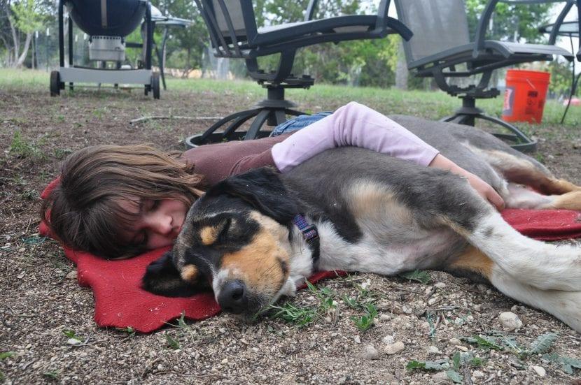 beneficios de tener animales para los niños