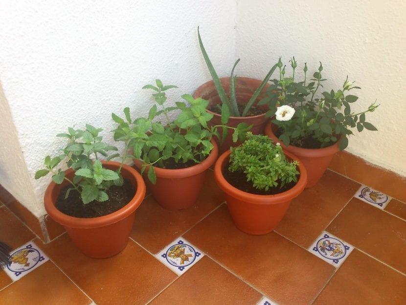 macetas en una terraza