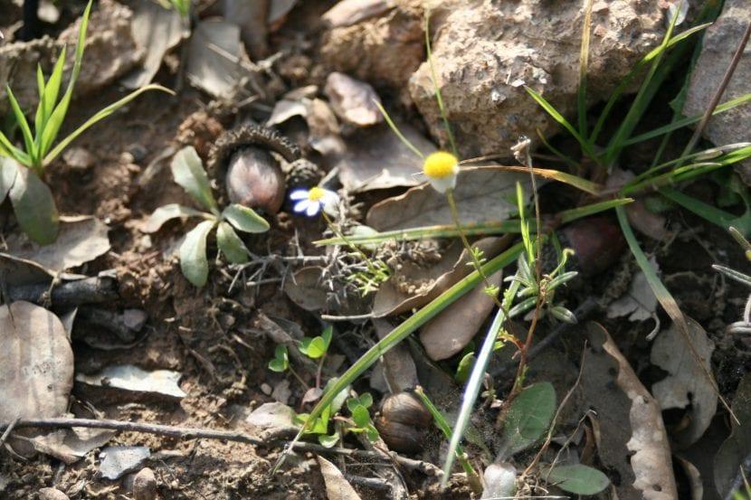planta entre rocas