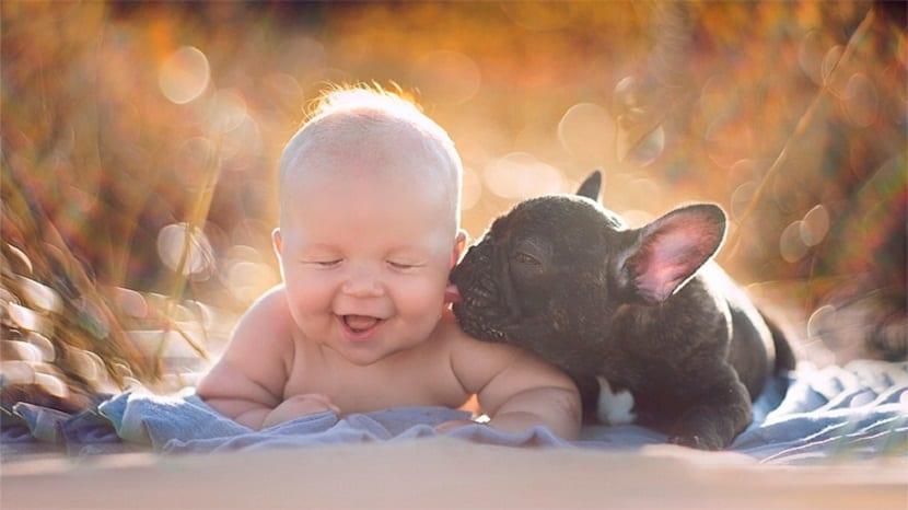 Mascota besa a bebé
