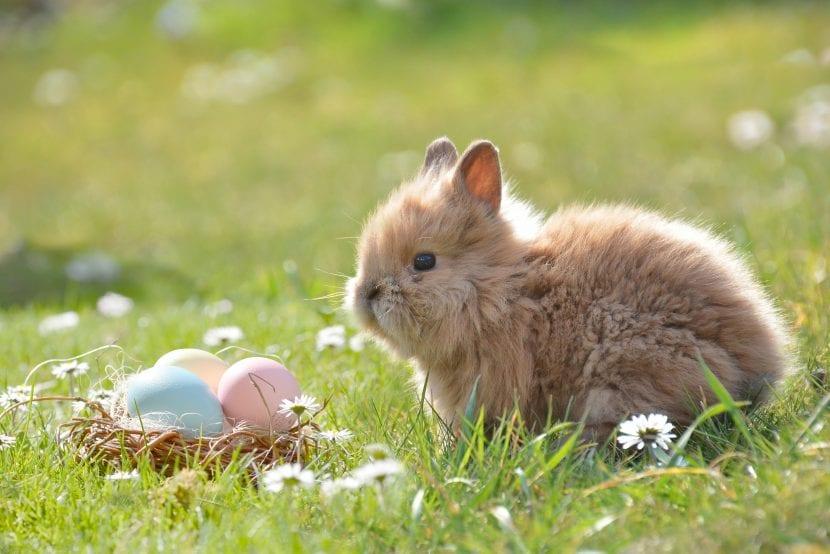 el origen de los huevos y el conejo de pascua