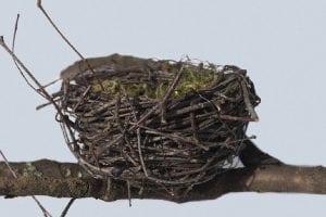 síndrome nido vacío