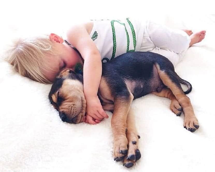 Niños y animales, educando la empatía