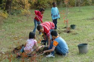 Por qué deberías plantar un árbol con tus hijos