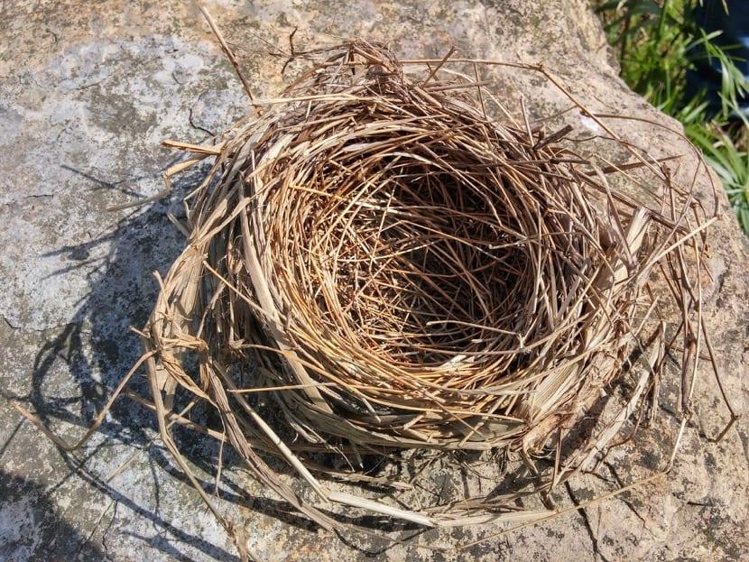 nido vacio en la familia