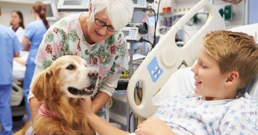Terapia con perros para niños