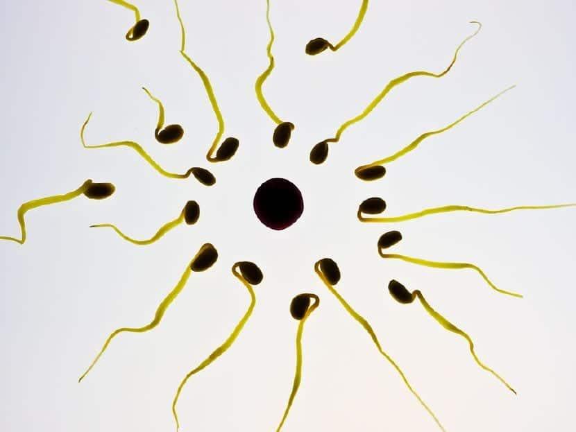 mejorar calidad esperma