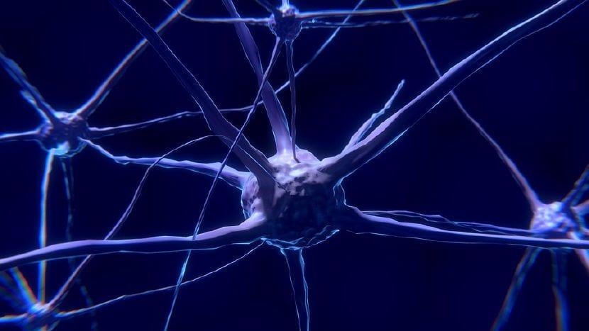 cambios cerebrales madre