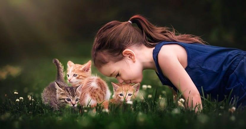 Niña besando a un pequeño gatito