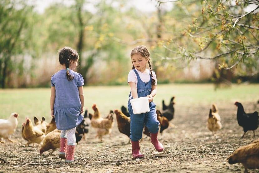 Niñas alimentando a unas gallinas