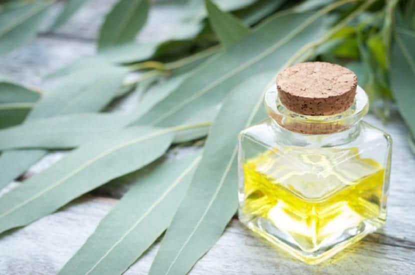Aceite de eucalipto casero