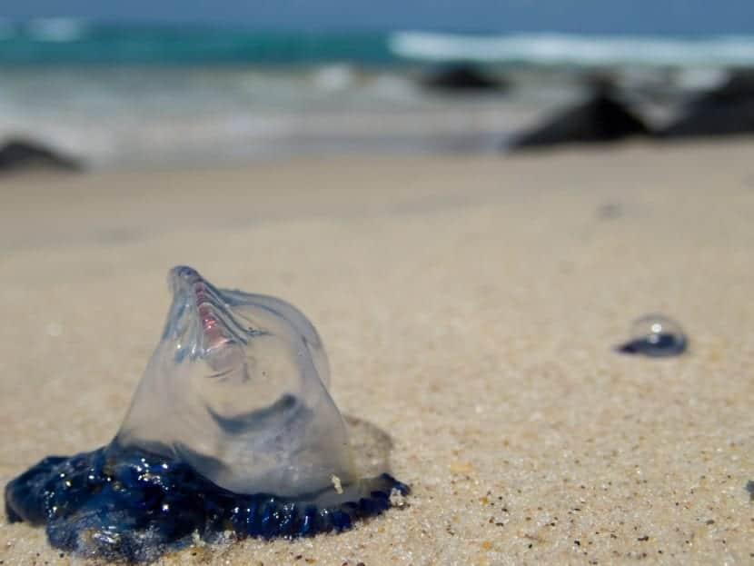 cuidado con las medusas