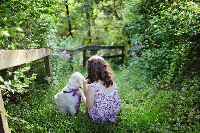 mejores razas perro niños
