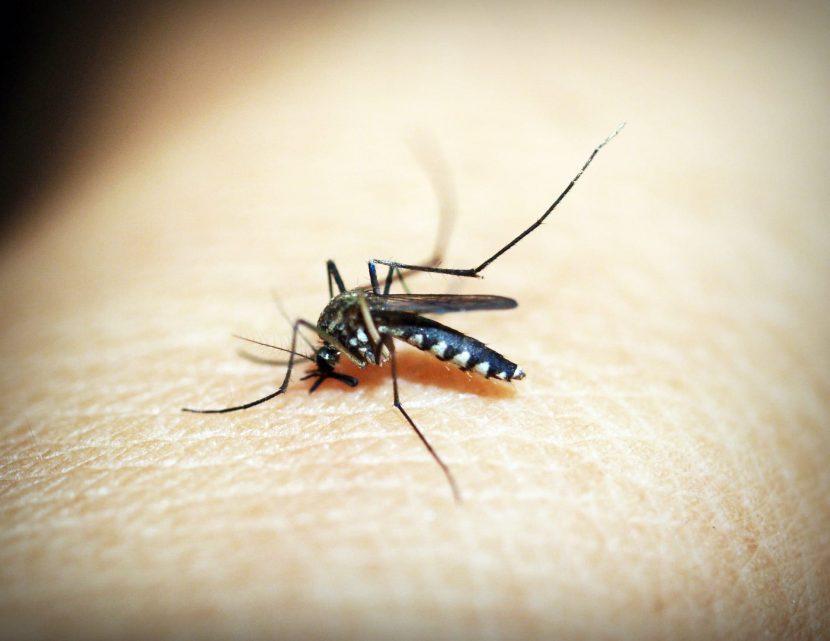 los peligros del mosquito tigre en los niños
