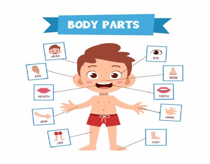 Aprender las partes del cuerpo