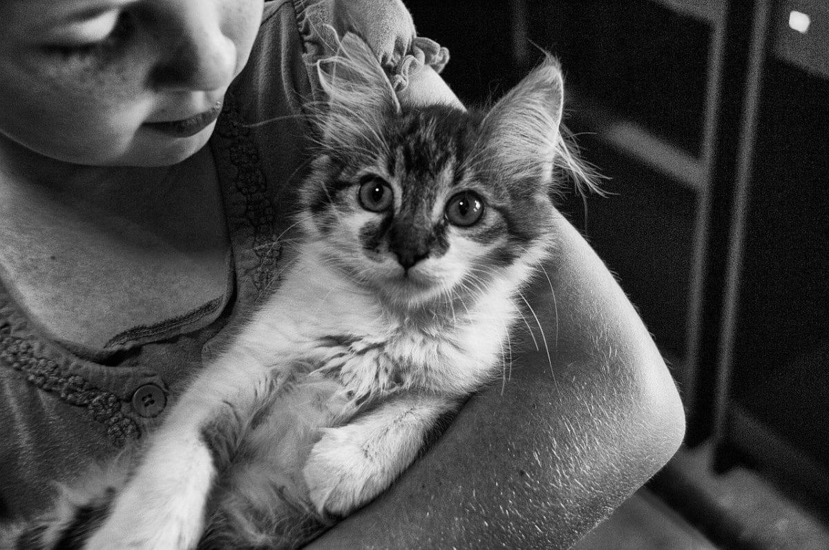Tener un gato es beneficioso para la familia