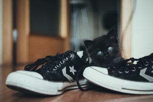 Bebés y gatos: qué debes saber