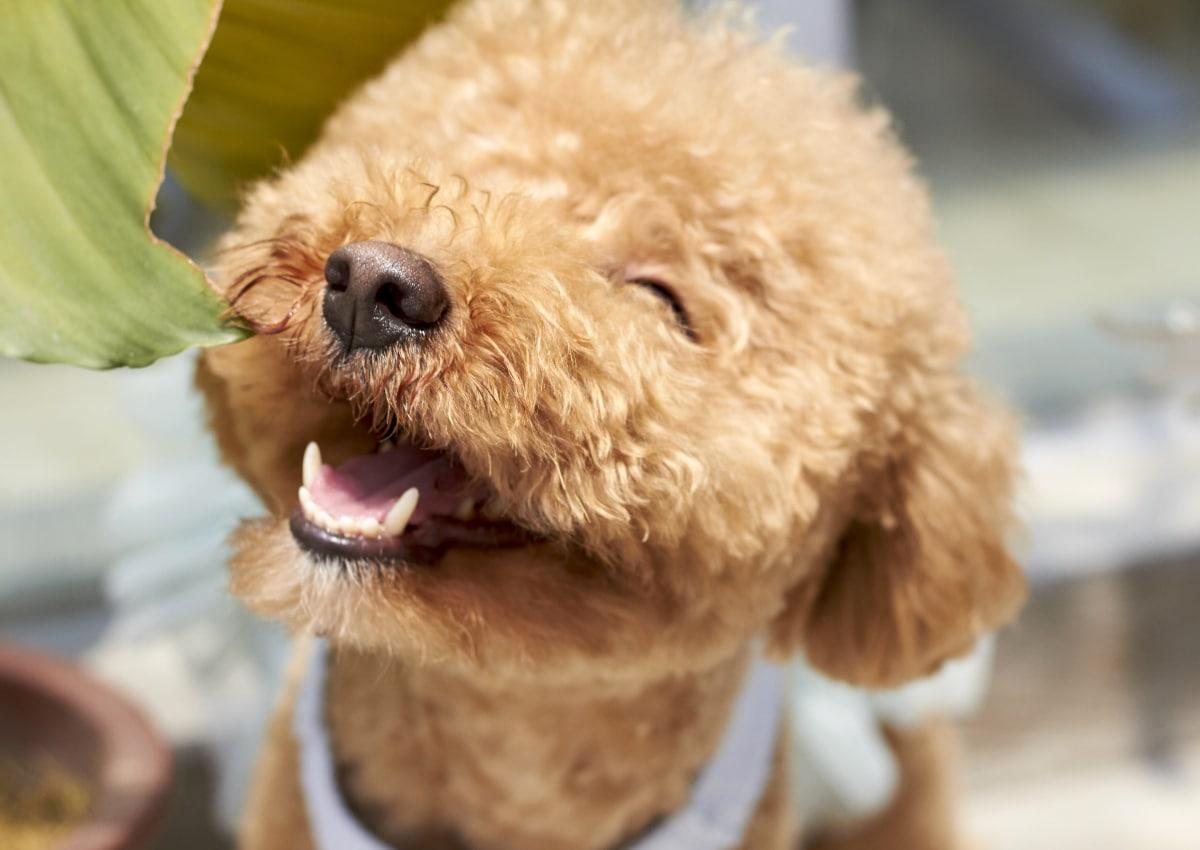 Lavar almohadillas a perros