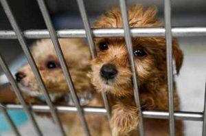 Día Internacional del Animal sin Hogar