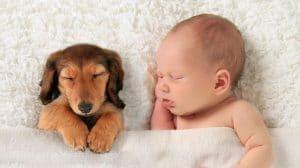 bebé y perrito