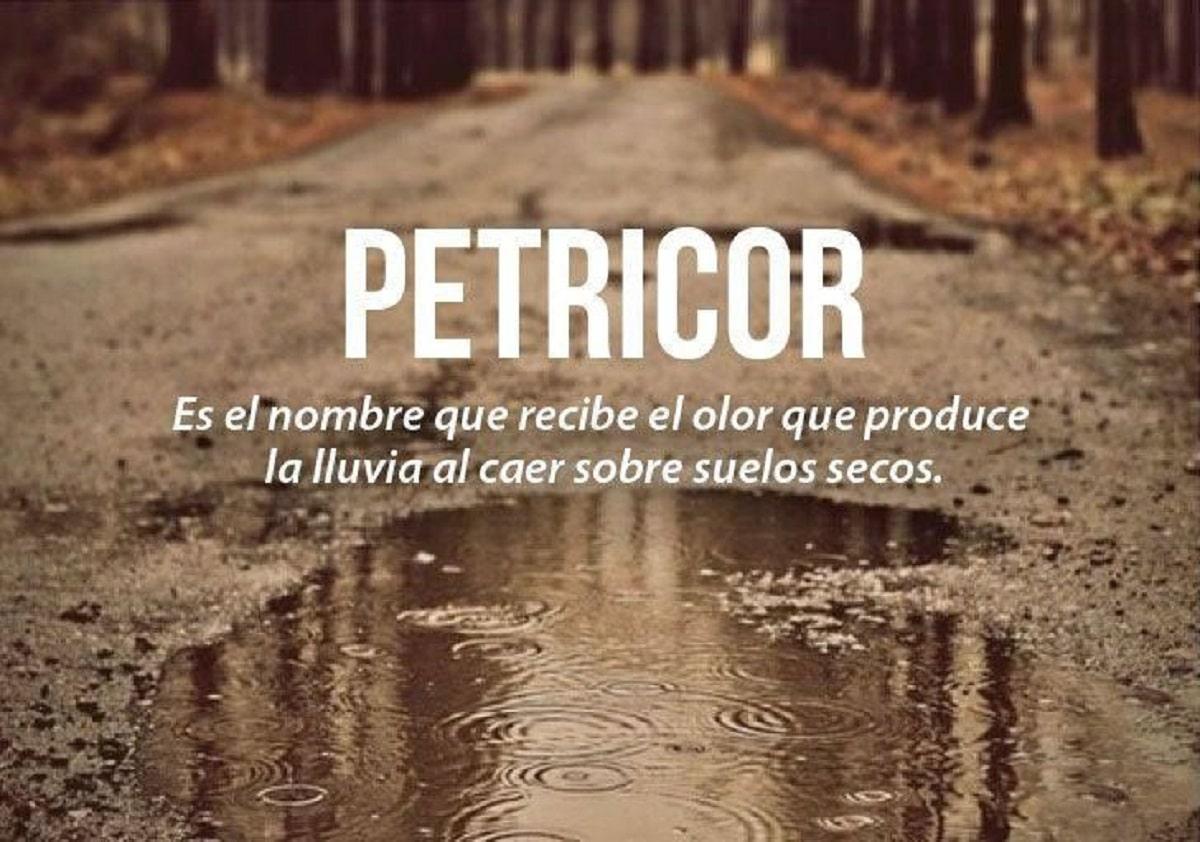 Palabra petricor