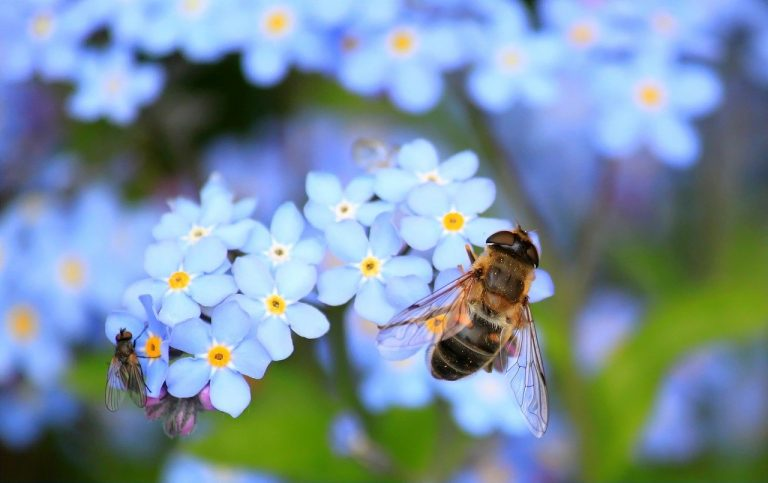 La importancia de las abejas en la naturaleza