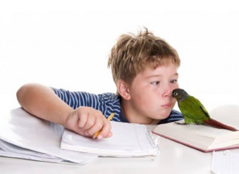 niño tareas escolares