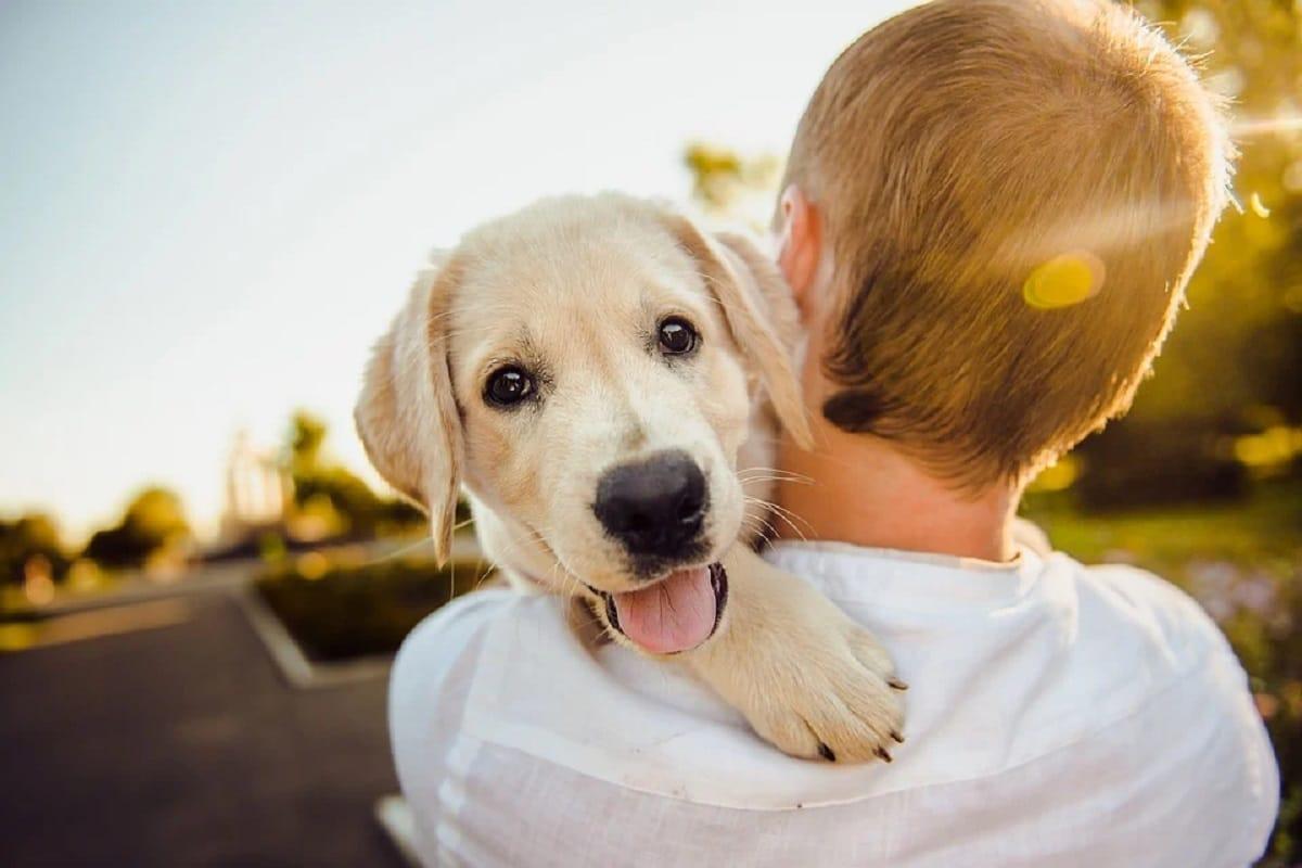 Enseñar a cuidar de su mascota