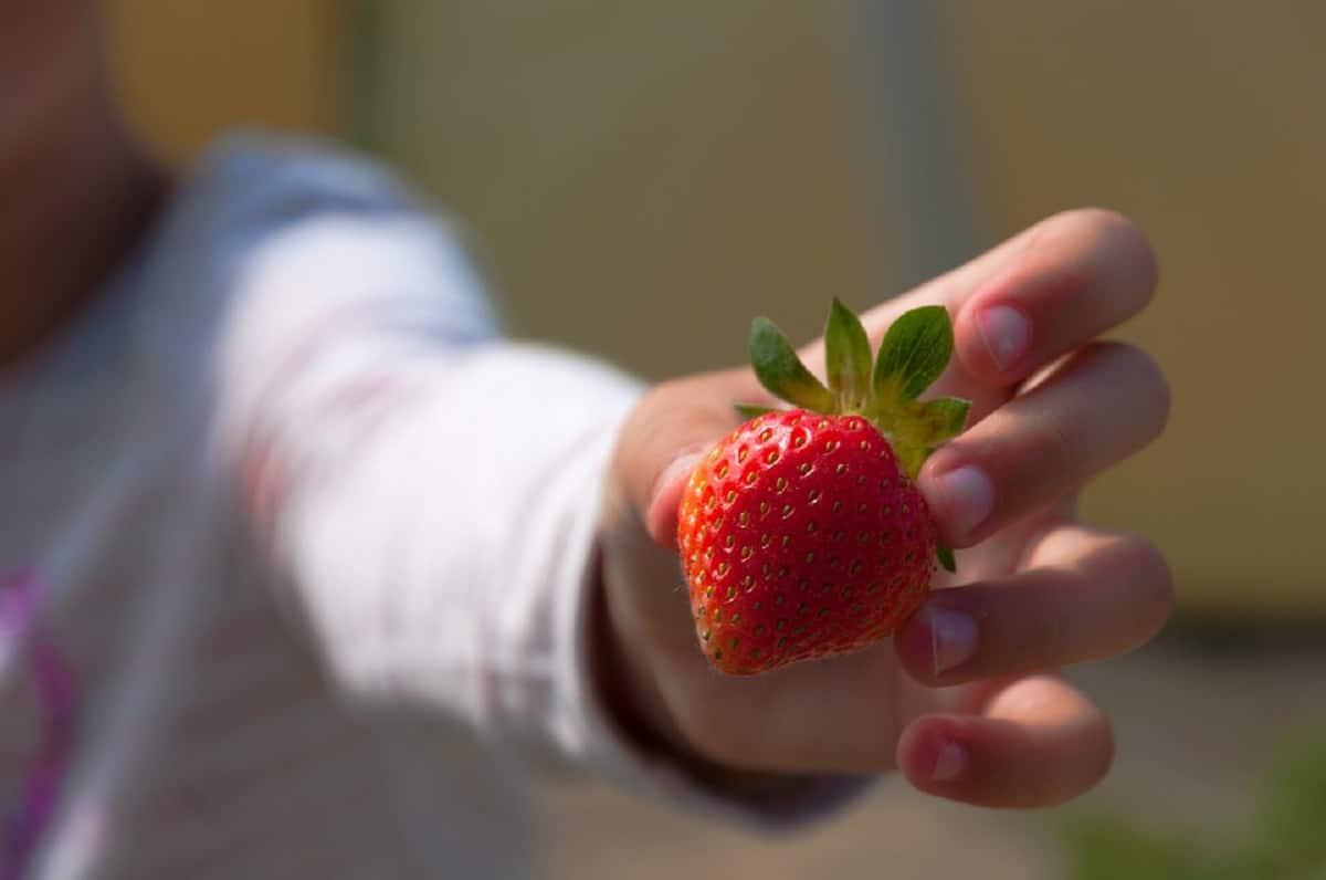 La fruta es beneficiosa para los niños