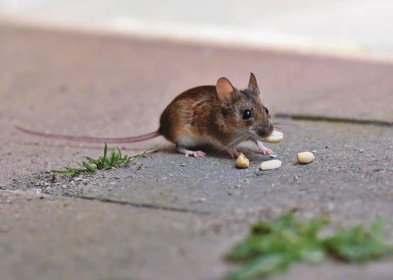 Mi hijo comió veneno para ratas